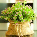 Растение в подарок Водолею