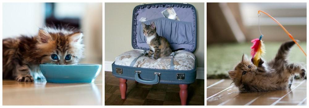 Подарки животным на День кошек