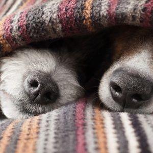 16 марта - Всемирный день сна: история, традиции и подарки