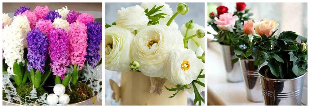 Цветы в горшке - букет для любимой