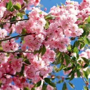 Как провести майские праздники: 10 идей